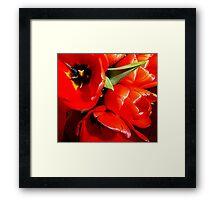 Flaming Tulips Framed Print