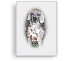 The Beautiful Weimaraner Breed Canvas Print