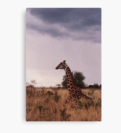 Giraffe - Kenya Canvas Print