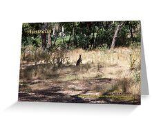 Kangaroos - Hanging Rock, Victoria Greeting Card