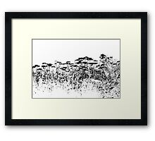 A Field Of Wild Cow Parsnip  Framed Print