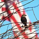 Finch by Bob Hardy