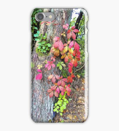 Virginia Creeper Fall Colors iPhone Case/Skin