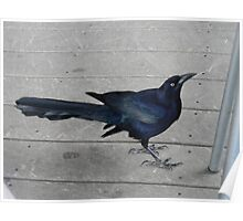 Breakfast With Blue Grackles Poster