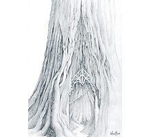 Lothlorien Mallorn Tree Photographic Print