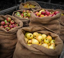 Cider Apples  by Rob Hawkins