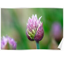 Chive Blossom 3 Poster