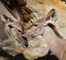 Greater Kudu Affection Sticker