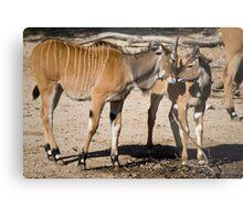 Animal Affection Metal Print