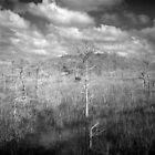 Sawgrass prairie and Cypress Island by Bill Wetmore