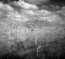 Sawgrass prairie and Cypress Island by Bill Wetmore
