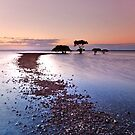Mangrove Heaven - Cleveland Qld Australia by Beth  Wode
