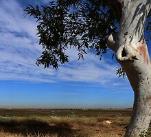 Lone Tree in The Pilbara  by myraj