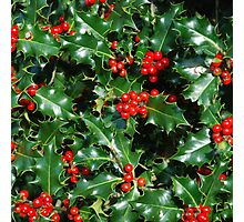 HOLLY 2 Photographic Print