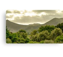 South African Vineyard  Canvas Print