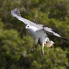 Low Flying  by byronbackyard