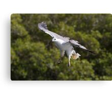 Low Flying  Canvas Print