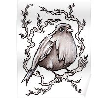 Sitting Pretty Bird Poster