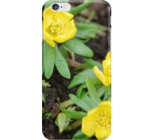 First Yellow Flowers of the Season iPhone Case/Skin