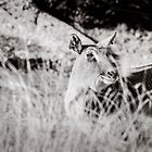 black and white portrait of an innocent doe by Stwayne