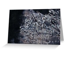 Blossoms yet to Flourish Greeting Card