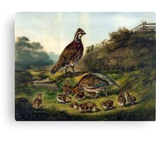 Cares of a family - 1856 - Currier & Ives Canvas Print