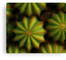 Soft cactus Canvas Print