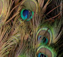 Peacock #1 Sticker