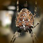 Spider by Ana Belaj