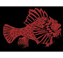 THE REDSCORPION FISH  (red on black) Photographic Print