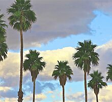 Palm Trees and Clouds by John Butler