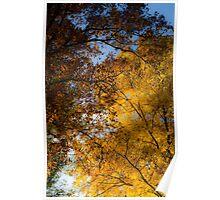 Golden Trees Poster