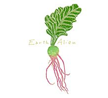 Earth Alien Watermelon Radish Photographic Print