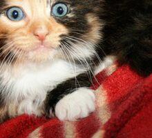 Baby Blue Eyes Sticker