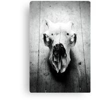 Still Life of an animals skull Canvas Print