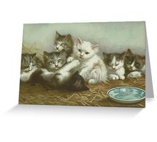 Cute Kitten Litter Greeting Card