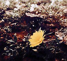 Wild flower by Kirayamato