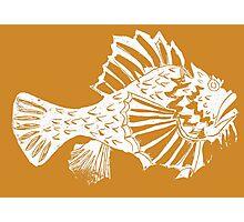 THE REDSCORPION FISH  (WHITE ON YELLOW ) Photographic Print