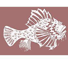 THE REDSCORPION FISH  (white on rose on powder pink) Photographic Print