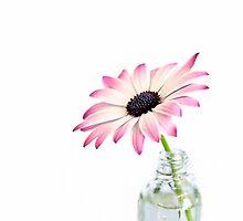 Daisy Beauty by artsandsoul