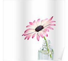 Daisy Beauty Poster