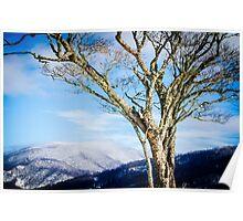 Frozen Dogwood Poster