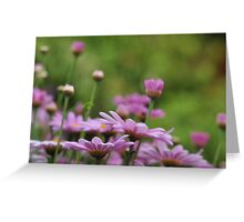 Daisies in the pink Greeting Card