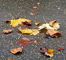 Leaves in Rain by Sue Robinson