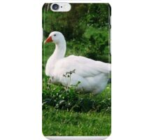 White Gus and Green Meadow . iPhone Case/Skin