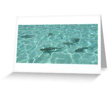 Reef Sharks Greeting Card