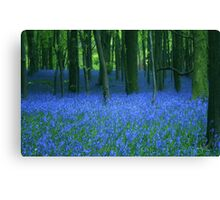 Bluebell, wood. Canvas Print