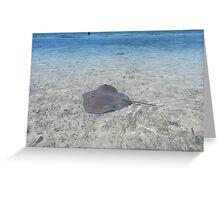A Stingray by a small island near Moorea, French Polynesia Greeting Card