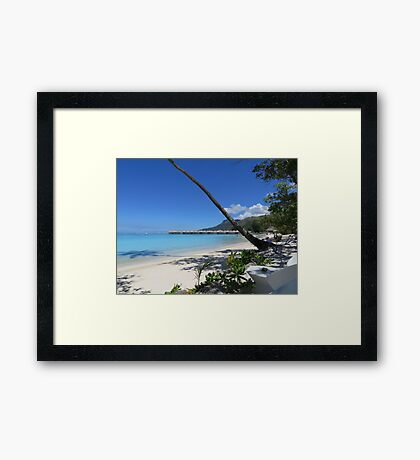 Palm Tree on a beach Framed Print
