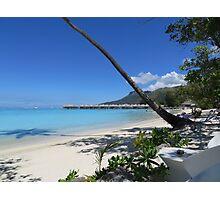 Palm Tree on a beach Photographic Print